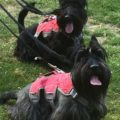 Lulu & Darcey